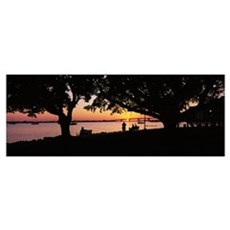 Silhouette of trees in a park, Bayfront Park, Sara Poster