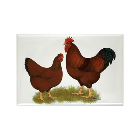 New Hampshire Chickens Rectangle Magnet