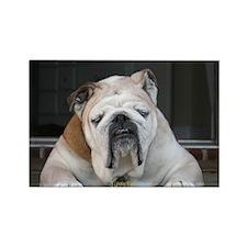 Sleeping Bulldog Rectangle Magnet (10 pack)
