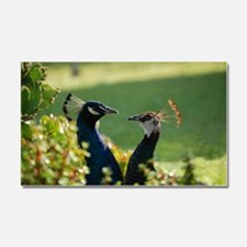 Peacocks 0316 - Car Magnet 20 x 12