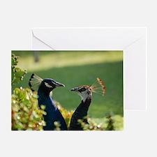 Peacocks 0316 - Greeting Card