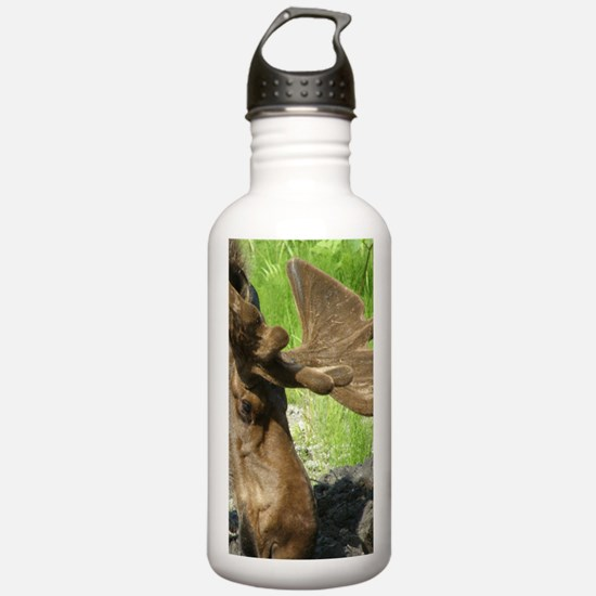 Bull Moose #01 Water Bottle