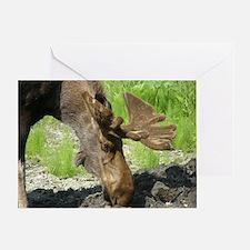 Bull Moose #01 Greeting Card