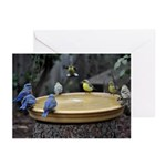 Blue Birds & Finches Greeting Cards (Pk of 20)
