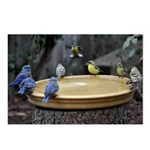 Blue Birds & Finches Postcards (Package of 8)
