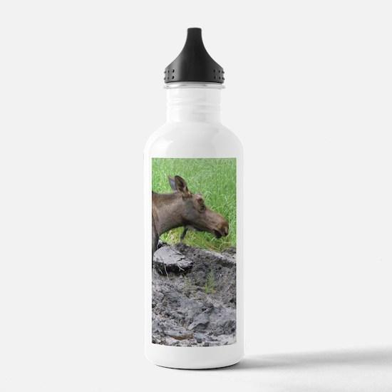 Bull Moose #02 Water Bottle