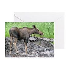 Bull Moose #02 Greeting Card