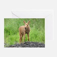 Moose Calf #01 Greeting Card