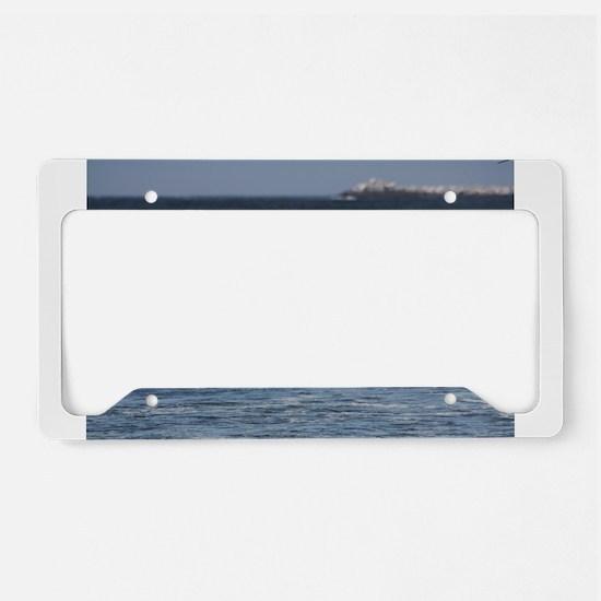 Beach Birds Photography & Pro License Plate Holder