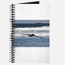 Beach Birds Photography & Pro Journal