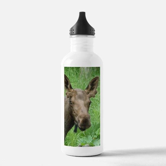 Bull Moose #03 Water Bottle