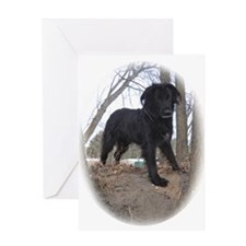 Want To Play Dog Greeting Card