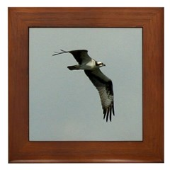 Flying Osprey Framed Tile