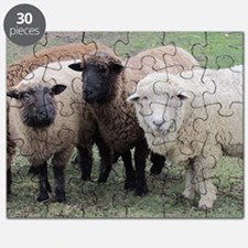 3 faces of sheep Puzzle