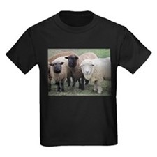 3 faces of sheep T