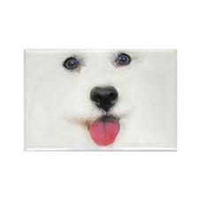 Bichon face Rectangle Magnet (100 pack)