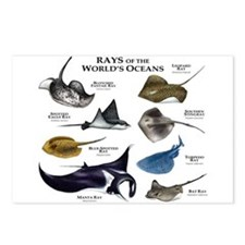 Rays of the World Postcards (Package of 8)