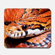 Corn Snake 3 Mousepad