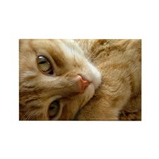 Coy Cat Rectangle Magnet