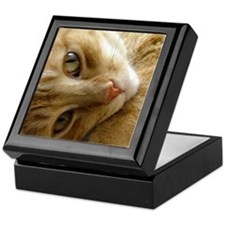 Coy Cat  Keepsake Box