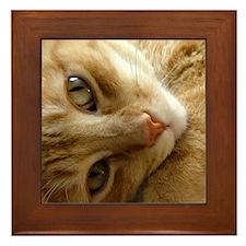 Coy Cat  Framed Tile