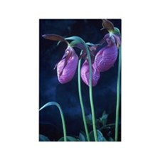 Pink Lady's Slipper Rectangle Magnet