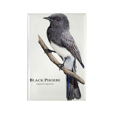 Black Phoebe Rectangle Magnet