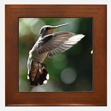 Hummingbird 0002 - Framed Tile