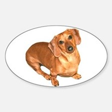 Tiger Doxie Oval Decal