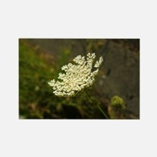 Queen Annes Lace Rectangle Magnet