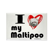 I Love my Maltipoo Rectangle Magnet
