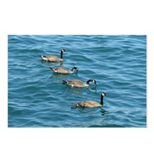 Line of Geese Postcards (Package of 8)
