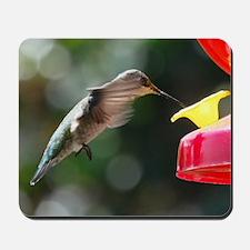Hummingbird 0004 - Mousepad