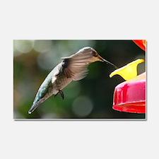 Hummingbird 0004 - Car Magnet 20 x 12