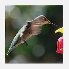 Hummingbird 0004 - Tile Coaster