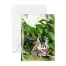 Mother Hummingbird feeding her child(Pk of 10)