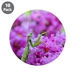 Pink and Praying Mantis 3.5
