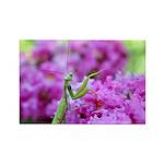 Pink and Praying Mantis Rectangle Magnet (10 pack)