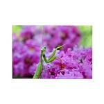 Pink and Praying Mantis Rectangle Magnet