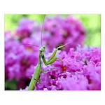 Pink and Praying Mantis Small Poster