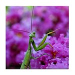 Praying Mantis Tile Coaster
