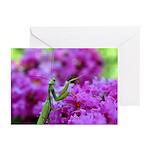 Praying Mantis Greeting Cards (Pk of 20)