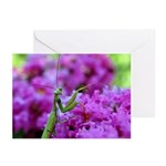 Greeting Cards Greeting Cards (Pk of 20)