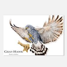 Gray Hawk Postcards (Package of 8)