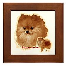 Pomeranian head and body Framed Tile