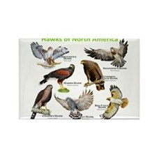 Hawks of North America Rectangle Magnet