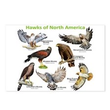 Hawks of North America Postcards (Package of 8)