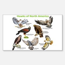 Hawks of North America Decal