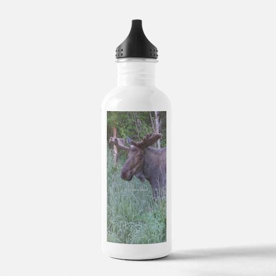 Bull Moose #04 Water Bottle