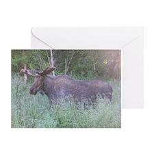 Bull Moose #04 Greeting Card